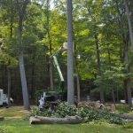 Tree Removal in New Canaan CT