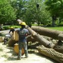 Tree Removals Can Benefit Your Property