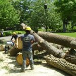 Tree Removal from Brother Tree & Lawn Services
