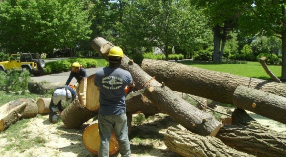 Tree Cutting Service in Stratford, CT