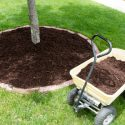 Planting a Tree? Be Sure to Mulch out, Rather Than Up