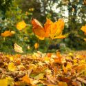 Ways to Recycle Autumn Leaves