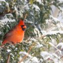 How to Turn Your Yard Into a Winter Refuge for Birds