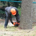 Why You Shouldn't Tackle Tree Removal on Your Own