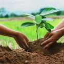 Protecting Your Trees This Summer from Diseases and Insects
